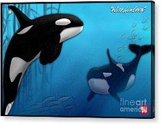 Orca Killer Whales Acrylic Print by John Wills