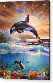 Orcas Acrylic Print by Adrian Chesterman