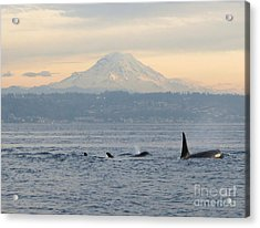 Acrylic Print featuring the photograph Orcas And Mt. Rainier II by Gayle Swigart