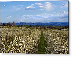 Orchard Country Spring Acrylic Print