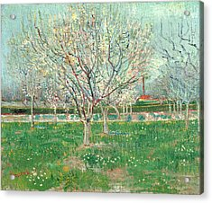 Orchard In Blossom, 1880  Acrylic Print by Vincent van Gogh