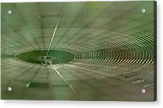 Acrylic Print featuring the photograph Orchard Orbweaver #2 by Paul Rebmann