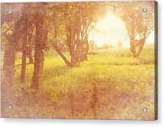 Orchard View Acrylic Print by Brett Pfister
