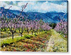 Orchard Views Acrylic Print by Fran Woods