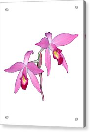 Orchid 1-1 Acrylic Print