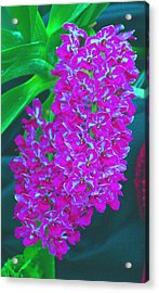 Orchid 14 Manipulated Acrylic Print by Sheila Byers