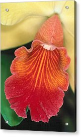 Orchid 16 Acrylic Print