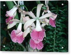 Orchid 17 Acrylic Print