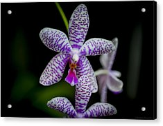 Orchid #3 Acrylic Print by Phil Abrams