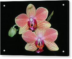 Orchid 4 Acrylic Print