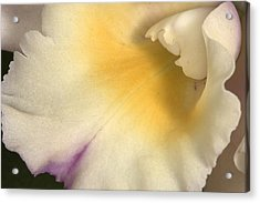 Orchid 486 Acrylic Print