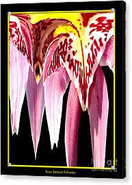 Orchid Abstract Acrylic Print by Rose Santuci-Sofranko
