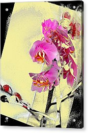Orchid And Cream Acrylic Print by Martin Jay