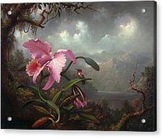 Orchid And Hummingbir Acrylic Print
