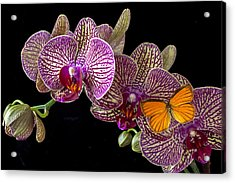 Orchid And Orange Butterfly Acrylic Print by Garry Gay