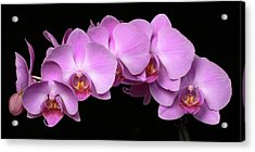 Acrylic Print featuring the photograph Orchid Arch by Harold Rau