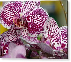 Orchid Art Acrylic Print by Greg Patzer