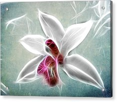 Orchid Blues Acrylic Print by Fiona Messenger