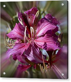 Acrylic Print featuring the photograph Orchid Blur by Penny Lisowski