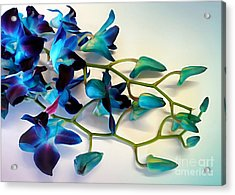 Orchid Bouquet Acrylic Print by Kaye Menner