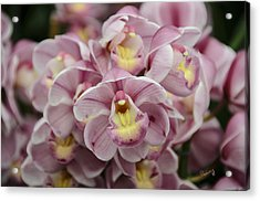 Orchid Bouquet Acrylic Print
