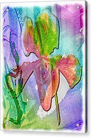 Orchid Burst Acrylic Print by Jill Balsam