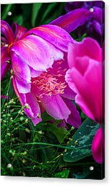 Orchid Cactus Acrylic Print by Thomas Hall