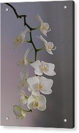 Orchid Cascade Acrylic Print