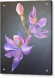 Orchid Acrylic Print by Catherine Swerediuk