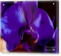Orchid  Acrylic Print by Charles Muhle