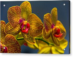 Orchid Color Acrylic Print by Marvin Spates