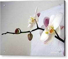 Orchid Coming Out Of Painting Acrylic Print by Barbara Yearty