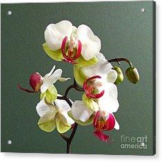 Orchid Acrylic Print by Deborah Johnson