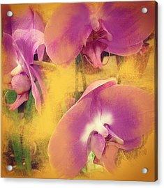 Orchid Dream Acrylic Print