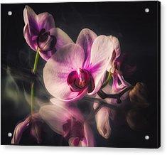 Orchid Dreams Acrylic Print