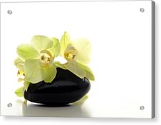 Orchid Flowers On Polished Stone Acrylic Print by Olivier Le Queinec