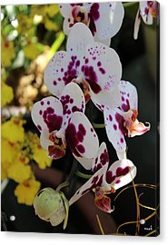 Orchid Four Acrylic Print by Mark Steven Burhart