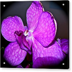 Orchid From Art Gallery Acrylic Print