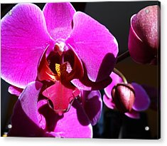 Orchid From My Valentine 3 Acrylic Print