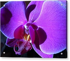 Orchid From My Valentine Acrylic Print