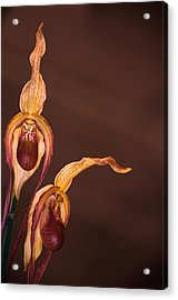 Orchid Greeting Acrylic Print