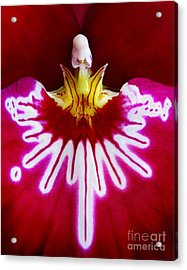 Acrylic Print featuring the photograph Orchid Harlequinn-pansy Orchid by Jennie Breeze