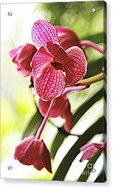 Orchid II Acrylic Print by Pamela Gail Torres