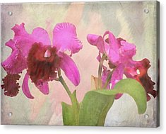 Orchid In Hot Pink Acrylic Print
