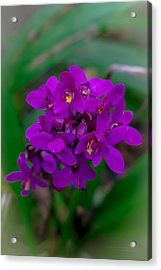 Orchid In Motion Acrylic Print