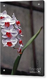 Orchid In Window Acrylic Print by Linda  Parker