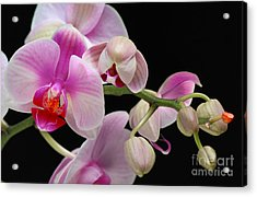 Acrylic Print featuring the photograph Orchid by JRP Photography