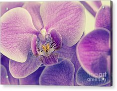 Orchid Lilac Dark Acrylic Print by Hannes Cmarits
