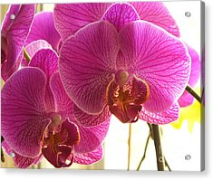 Acrylic Print featuring the photograph Orchid by Lingfai Leung