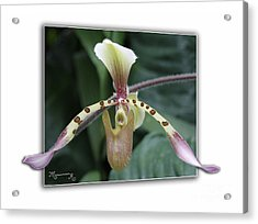 Acrylic Print featuring the photograph Orchid by Mariarosa Rockefeller
